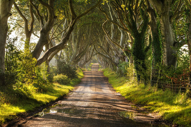 nature pics - Dark Hedges along Bregagh Road in Northern Ireland