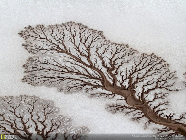 images of nature - Tree-like rivers in Baja California Desert