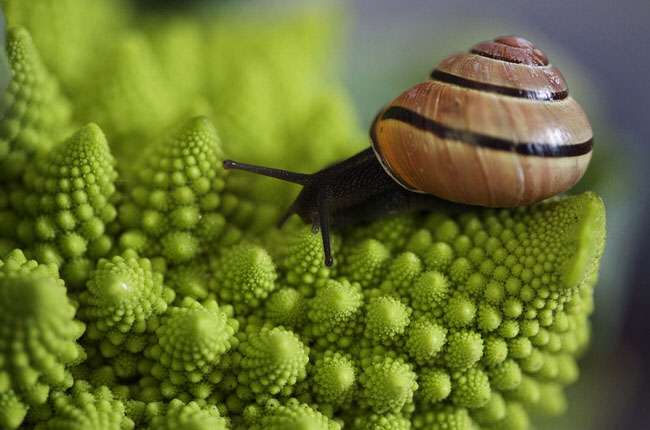 beautiful pics - snail in amsterdam