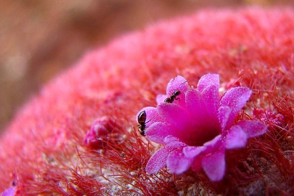 Small Pink Cactus Flower