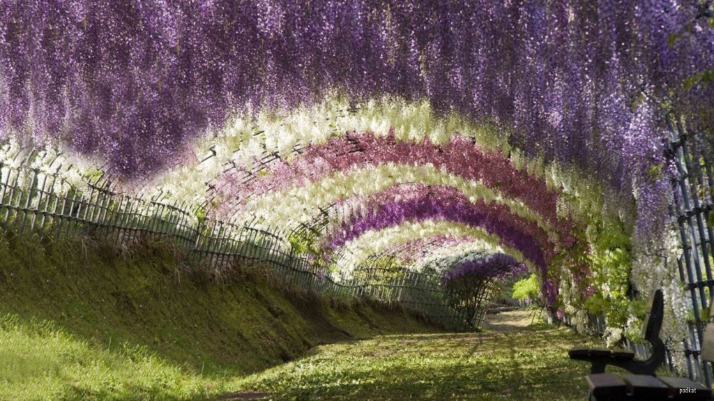 Flower Trees Wisteria Tunnel