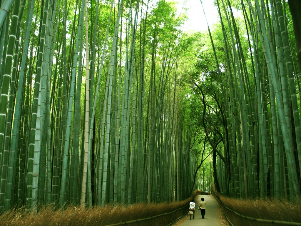 Bamboo Grove Trees Pictures