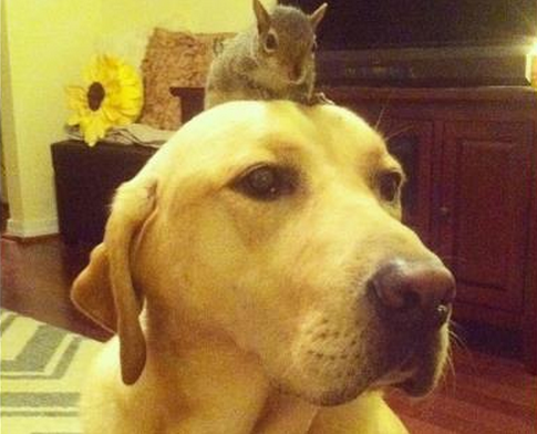 dog and squirrel
