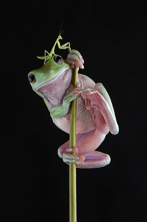praying mantis and frog