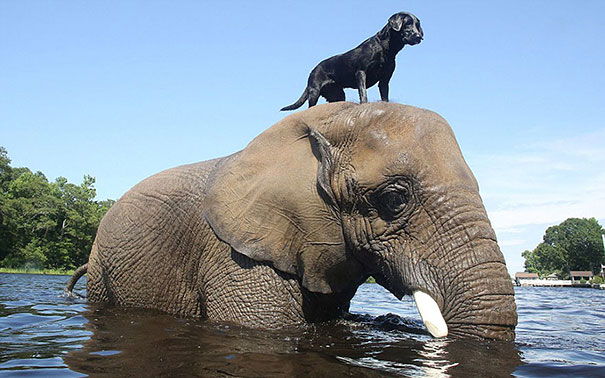 dog and elephant