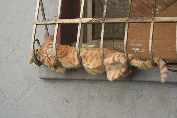 pictures of cats sleeping
