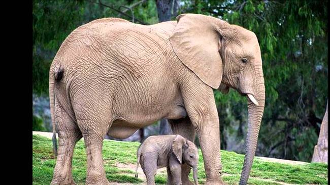 adult-animals-with-cute-babies-4