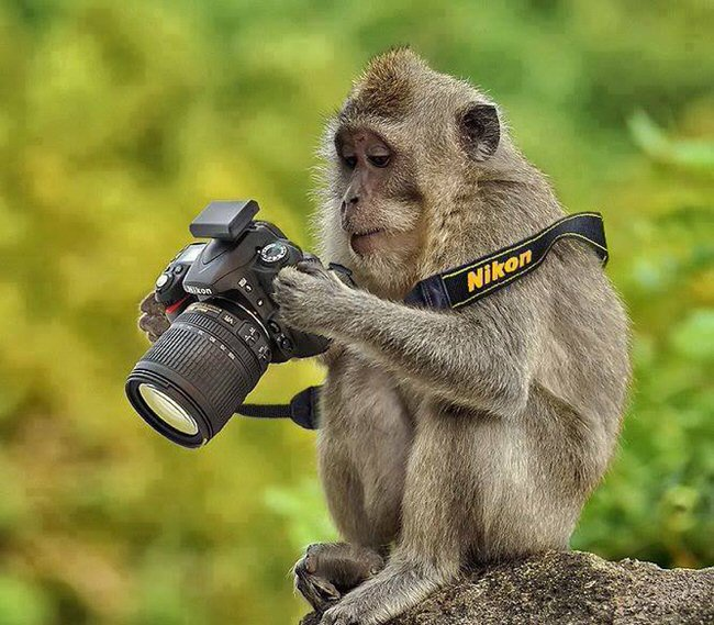 animals-taking-pictures-1