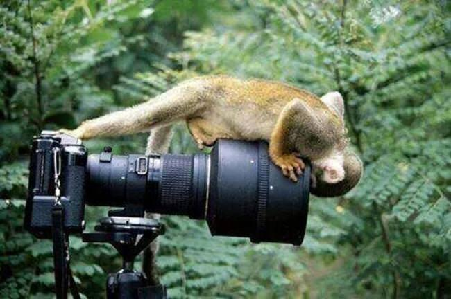 animals-taking-pictures-2