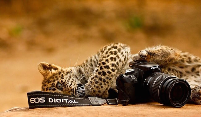 animals-taking-pictures-3