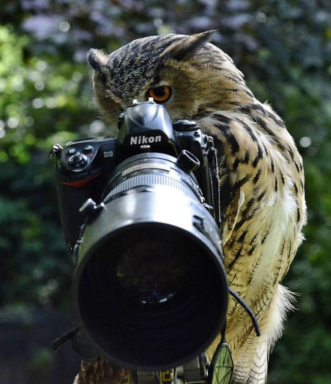 animals-taking-pictures-4