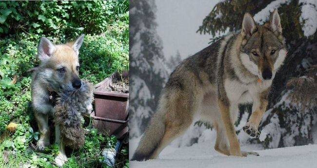 before-and-after-dogs-growing-up-4