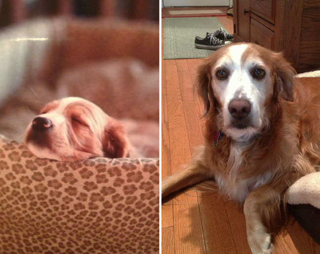 before-and-after-dogs-growing-up-5