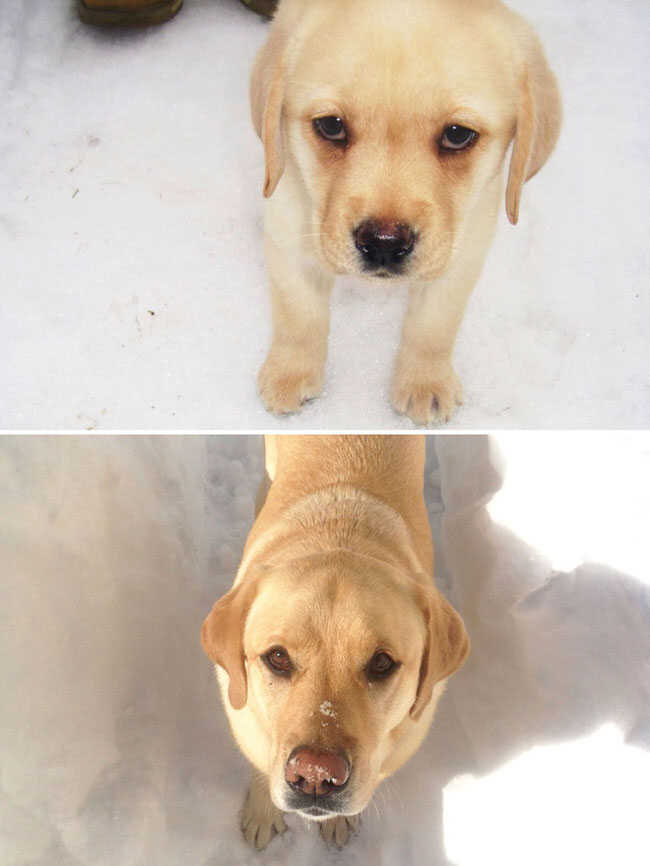before-and-after-dogs-growing-up-6