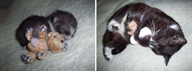 before-and-after-growing-up-cats-2