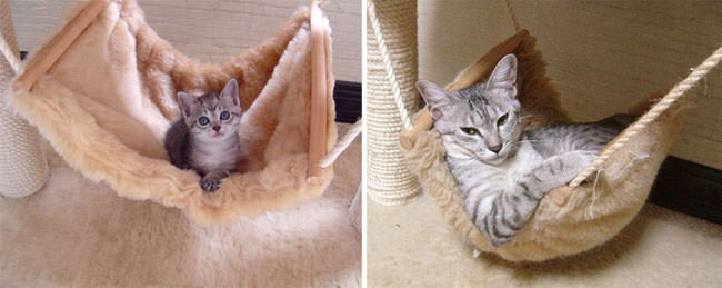 before-and-after-growing-up-cats-4