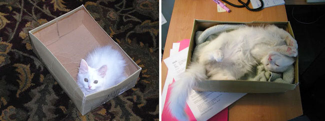 before-and-after-photos-of-cats-growing-up-2