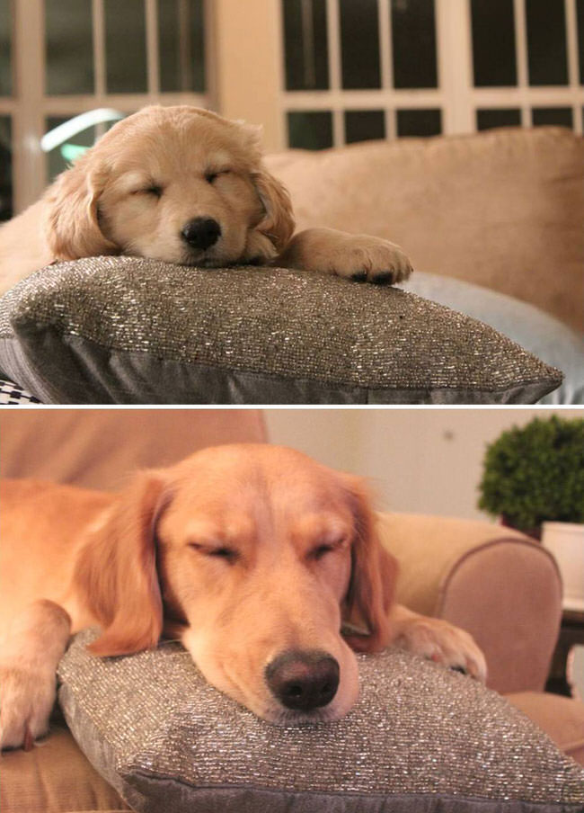 before-and-after-photos-of-dogs-2