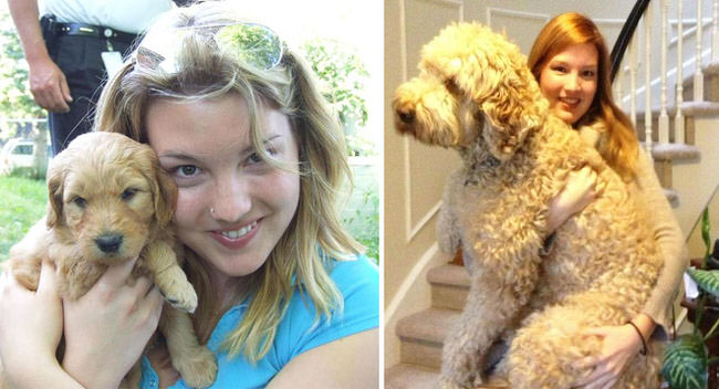 before-and-after-photos-of-dogs-3