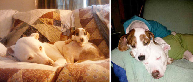 before-and-after-photos-of-dogs-6