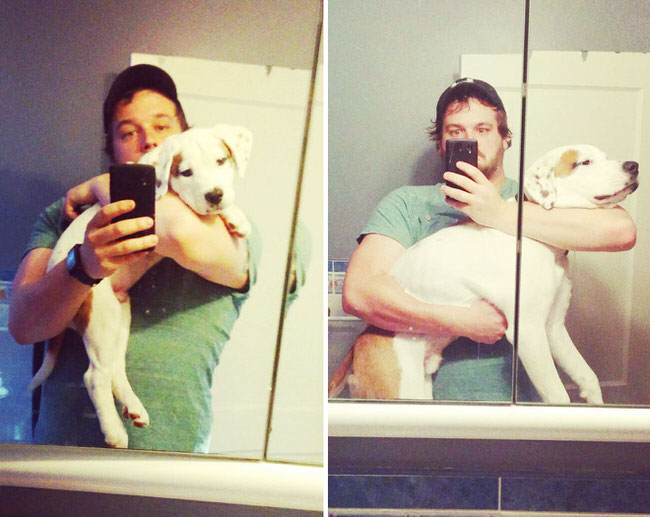 before-and-after-photos-of-dogs-7