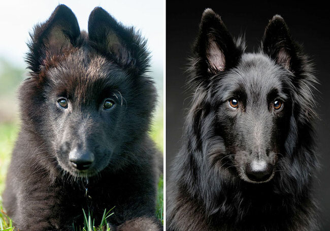 before-and-after-photos-of-dogs-8
