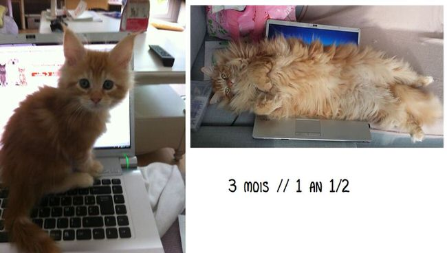 cats-before-and-after-pictures-2
