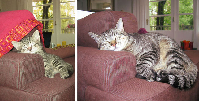 cats-before-and-after-pictures-3