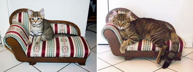 cats-growing-up-pics-1