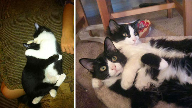 cats-growing-up-pics-4