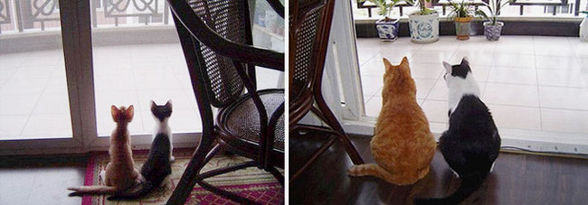 cats-growing-up-pics-5