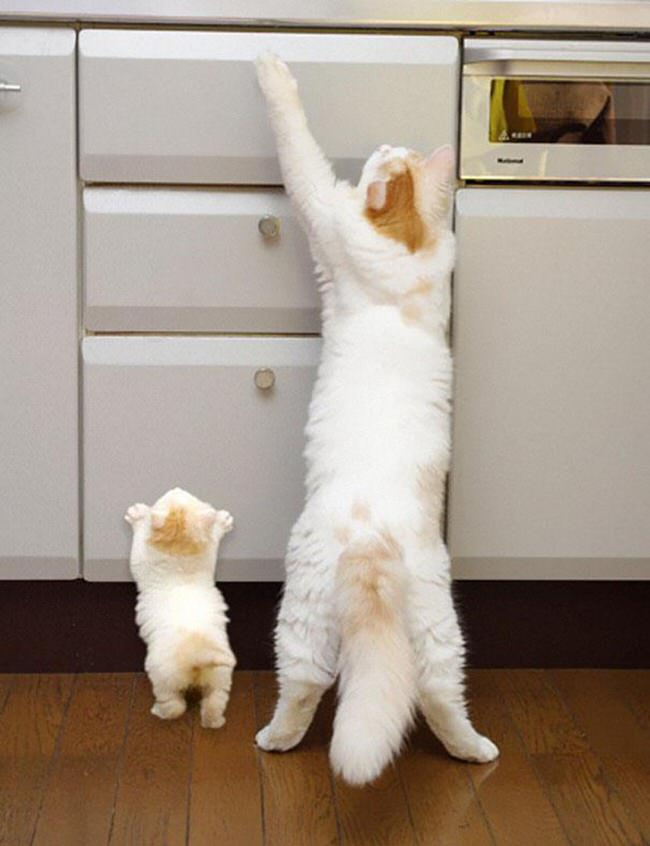 cute-baby-animals-with-identical-parents-2