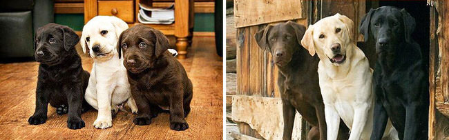dogs-before-and-after-1