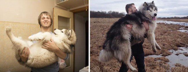 dogs-before-and-after-2
