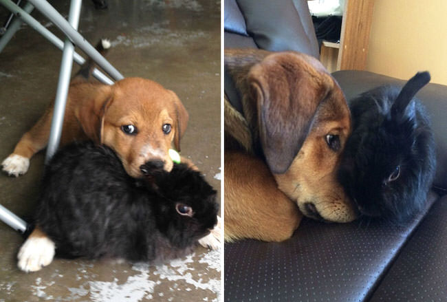 dogs-before-and-after-4