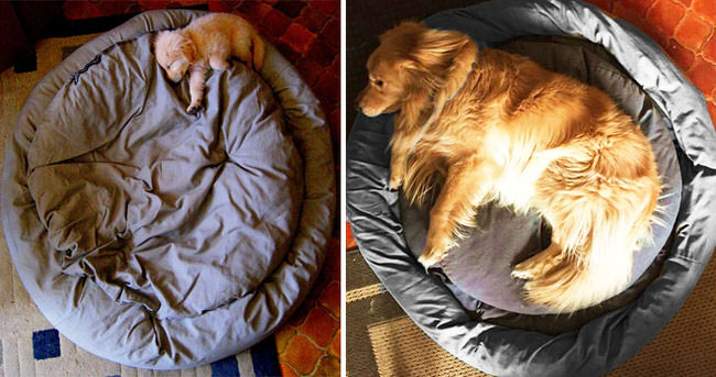 dogs-before-and-after-5
