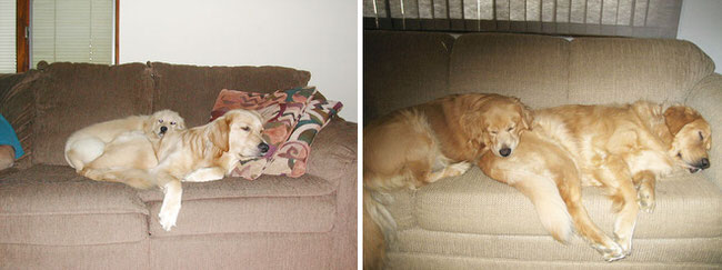 dogs-before-and-after-pictures-1
