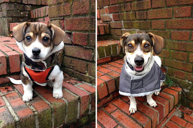 dogs-before-and-after-pictures-5