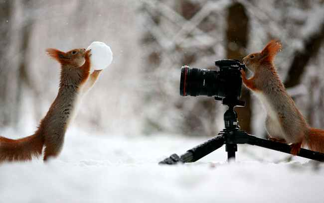 funny-animales-with-cameras-1