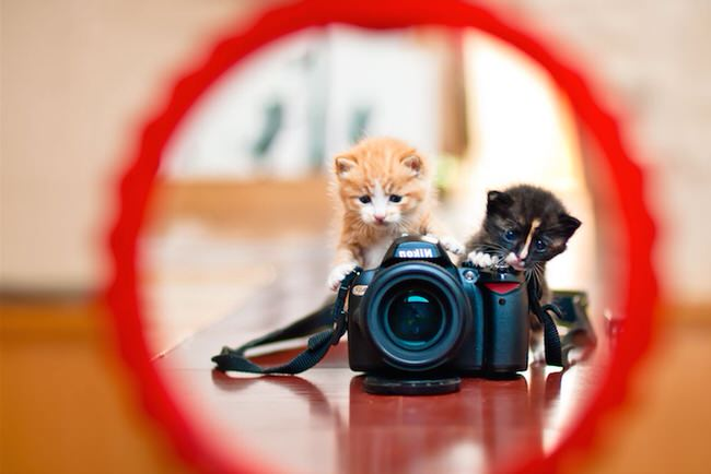 funny-animales-with-cameras-2