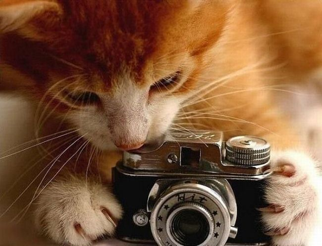 funny-animales-with-cameras-3