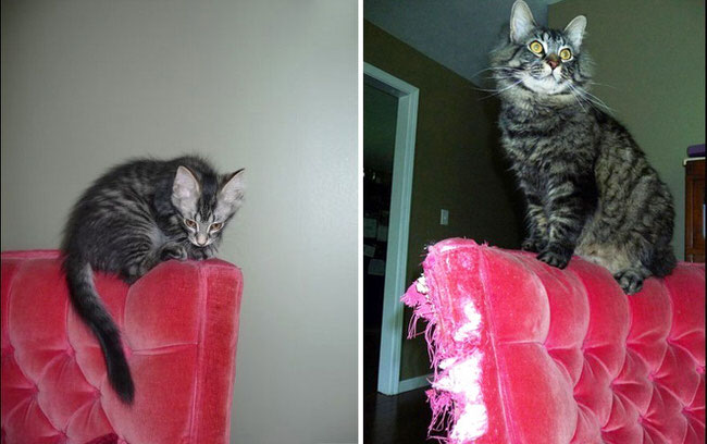 growing-up-cats-before-and-after-pictures-6