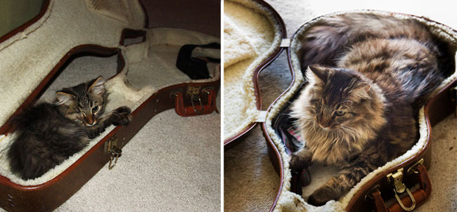 growing-up-cats-before-and-after-pictures-7