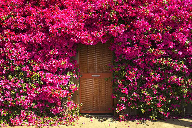 most-beautiful-doors-in-the-world-2