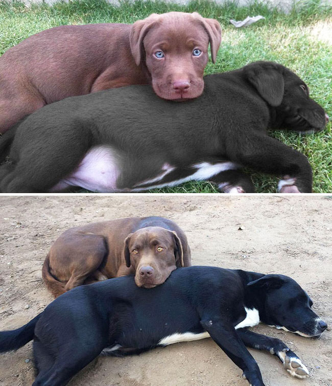 pictures-of-dogs-growing-up-1