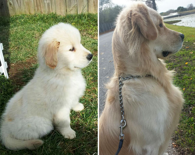 pictures-of-dogs-growing-up-6