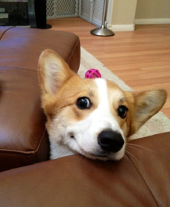 Image result for cute dog smiles