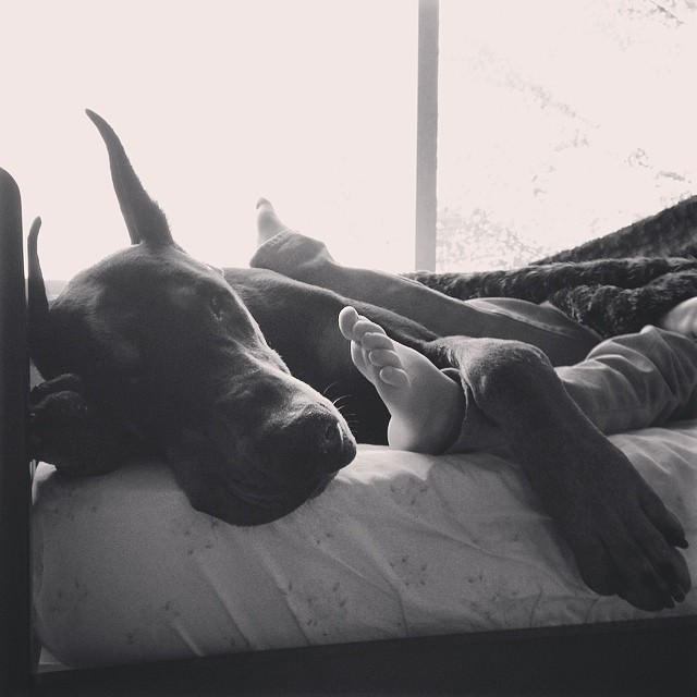 cutie-and-the-beast-dog-and-girl-doberman-best-friends-13