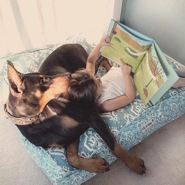 cutie-and-the-beast-dog-and-girl-doberman-best-friends-17