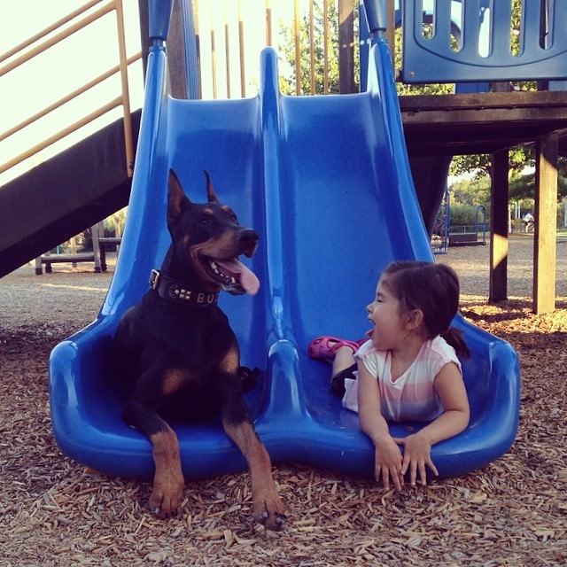 cutie-and-the-beast-dog-and-girl-doberman-best-friends-3